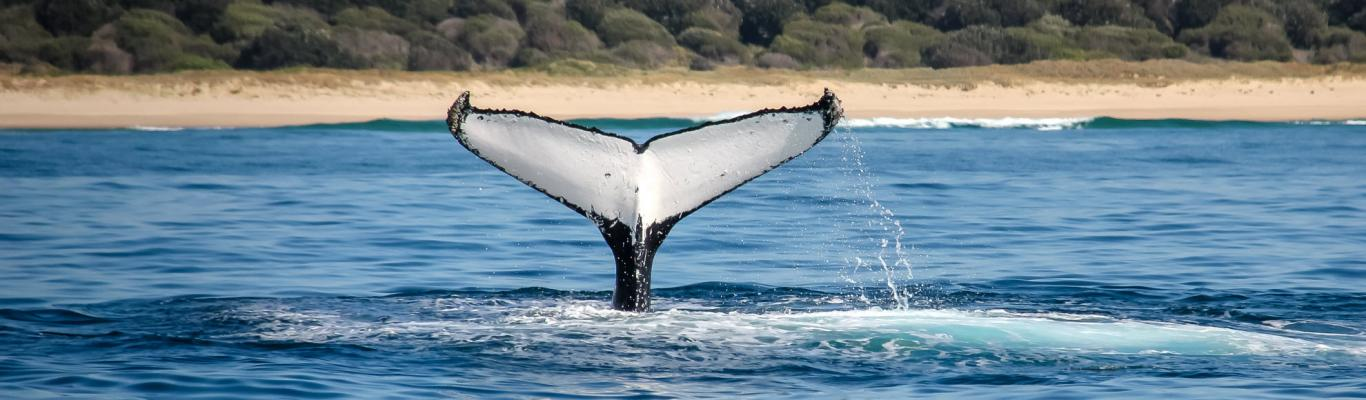 Port-Macquarie-Area-Image-Wild-About-Whales
